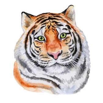 호랑이 얼굴 그림 흰색 절연. 수채화. 페인트로 만든 손.