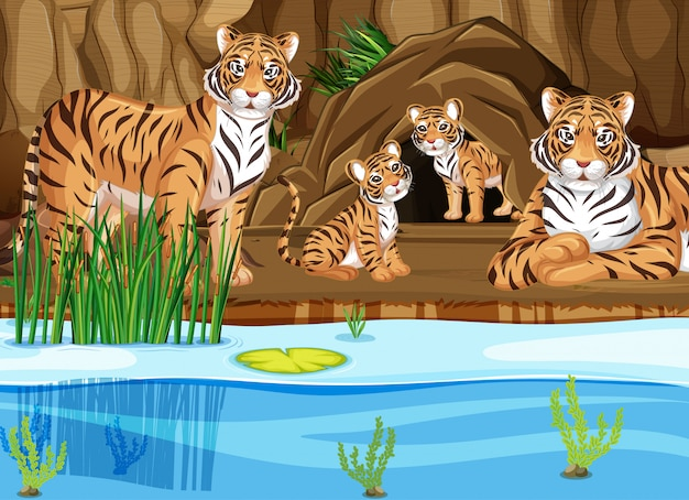 Tiger family by the pond