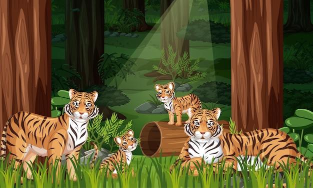 Семья тигров на фоне лесного пейзажа