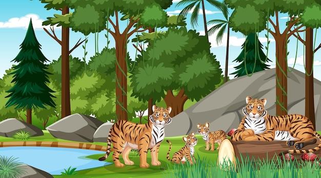많은 나무가 있는 숲이나 열대우림 장면의 호랑이 가족