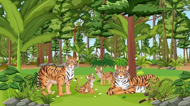 많은 나무와 숲 장면에서 호랑이 가족