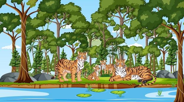 Семья тигров в лесной сцене с множеством деревьев