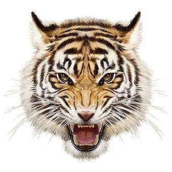 호랑이 머리 동물 야생 동물 손 그리기 및 흰색 바탕에 페인트.
