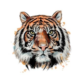 수채화의 스플래시에서 호랑이 머리 초상화.