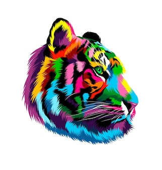 Tiger head portrait from multicolored paints splash of watercolor colored drawing realistic