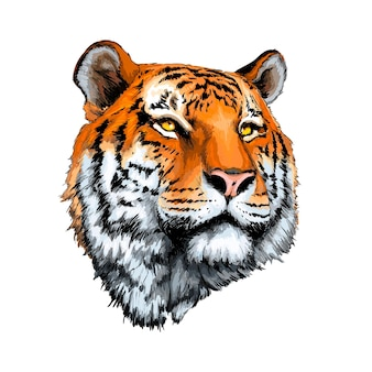 Tiger head portrait from a splash of watercolor
