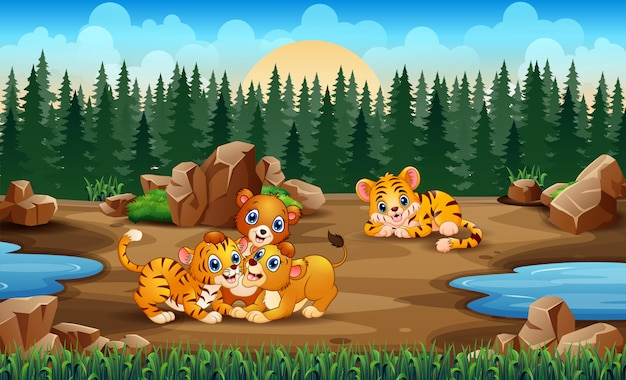 A tiger and lion families playing in the field