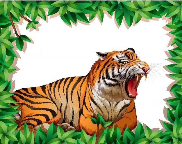 Tiger in nature frame