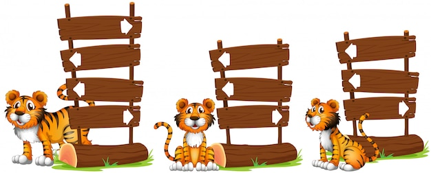 Tiger nex to wooden signs