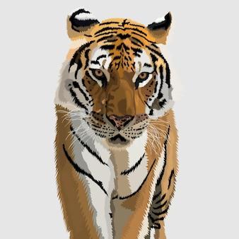 Тигр портрет рисованной иллюстрации и вектор