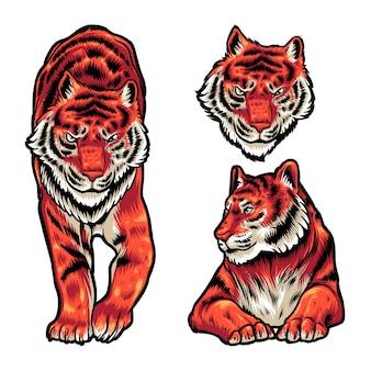 Tiger pose illustration