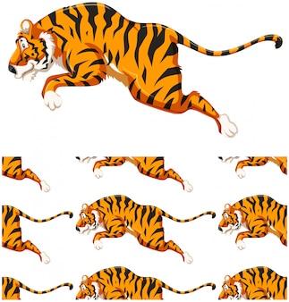 Бесшовный узор из тигров, изолированный на белом