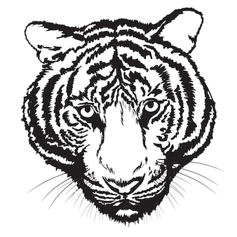 Tiger sketch free hand with digital brush