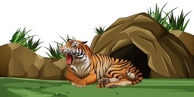 동굴 앞에서 자고있는 호랑이