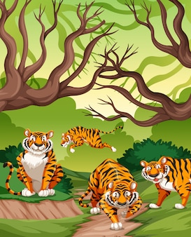 Tigers in jungle scene