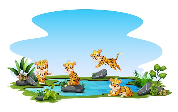 Tigers playing in the pond