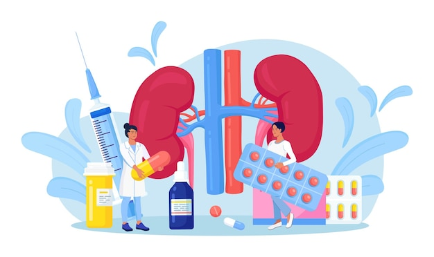 Tiny doctors doing medical research, examination, check of health. kidney disease treatment by pharmaceutical. nephrology, urology. diagnosis of pyelonephritis, kidney stones, renal failure, cystitis