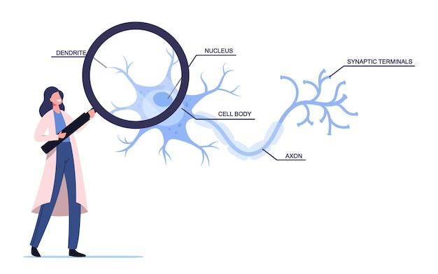 실험실에서 수상돌기, 세포체, 축삭 및 핵이 있는 인간 뉴런 체계를 학습하는 흰색 의료 가운을 입은 작은 과학자 여성 캐릭터
