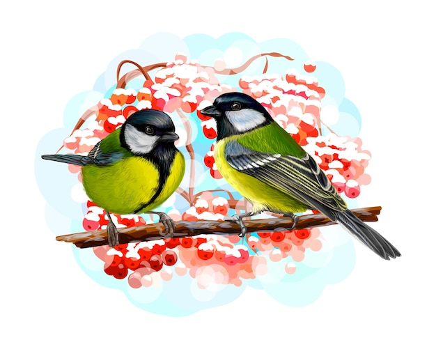 Tit birds sitting on a branch on white background, hand drawn sketch.  illustration of paints