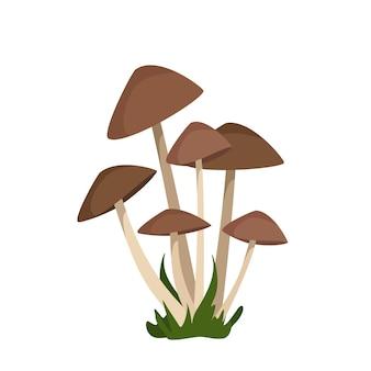 Грибы поганки с коричневыми шляпками на тонких белых ножках растут пучками среди травы