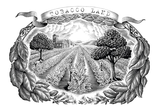 Tobacco land hand draw vintage engraving style black and white clip art isolated on white background