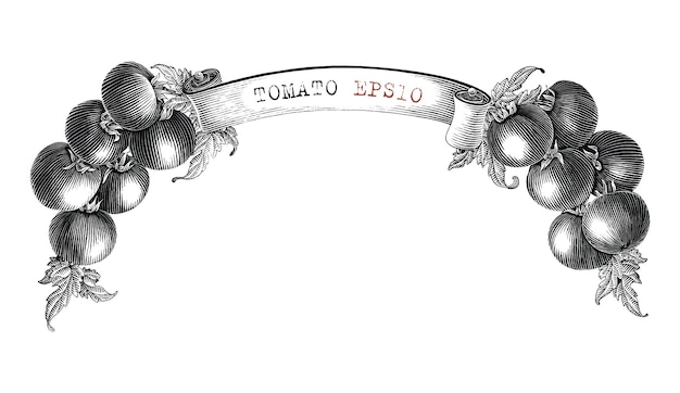 Tomato branding design for product label hand draw vintage engraving style black and white clip art isolated on white background2