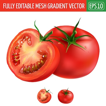 Tomato illustration on white