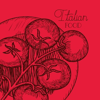 Tomato plant italian food drawn