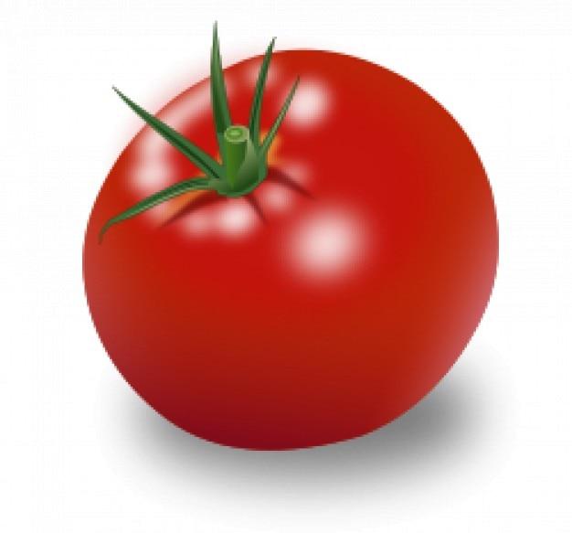 トマトベクトル赤い果実