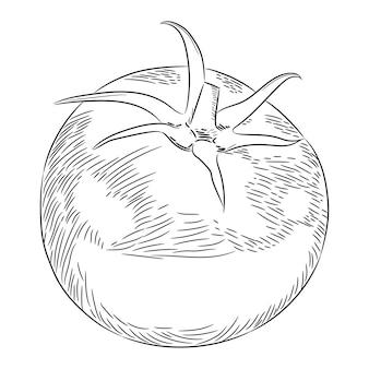Помидор целиком одним эскизом рисуем из контура черной кистью линии разной толщины