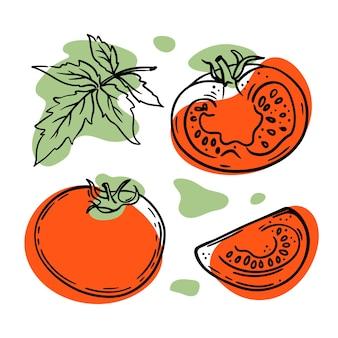 흰색 배경에 빨간색과 녹색 색상이 튀는 토마토와 조각 스케치