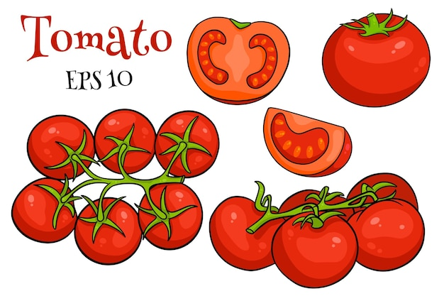 Tomatoes set. fresh tomatoes, tomatoes on a branch, a wedge and a half. in a cartoon style. vector illustration for design and decoration.