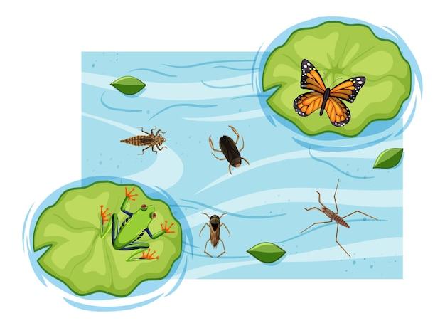 Vista dall'alto di insetti acquatici nello stagno