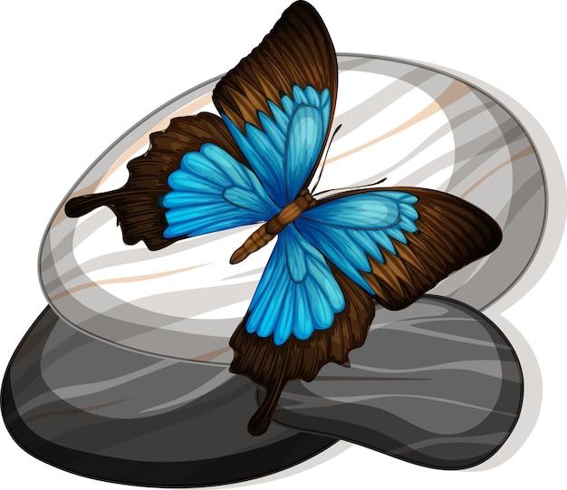 Vista dall'alto di una farfalla su una pietra su sfondo bianco