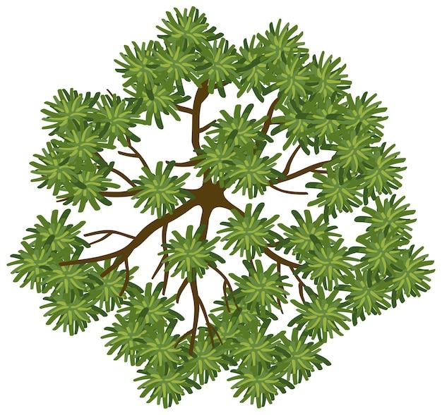 白い背景で隔離の木の上面図