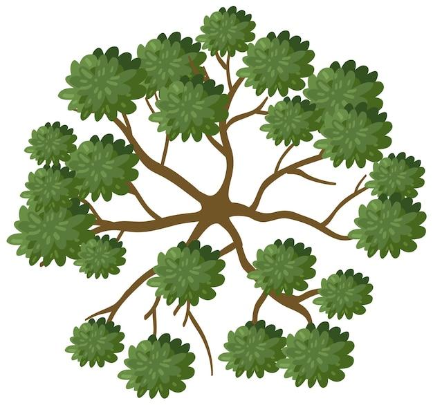 白い背景で隔離の枝を持つ木の上面図