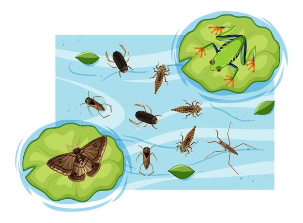池の水生昆虫の上面図