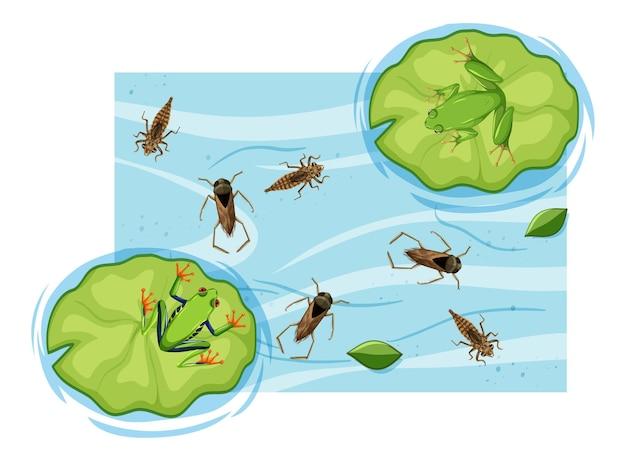 Вид сверху водных насекомых в пруду