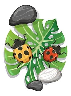 分離されたモンステラの葉のてんとう虫の上面図