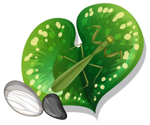 孤立した葉の上のカマキリの上面図