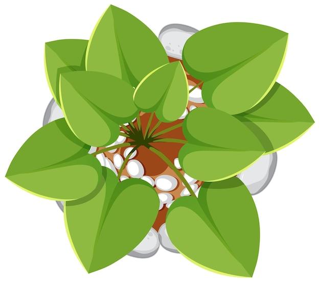 흰색 배경에 고립 된 냄비에 식물의 상위 뷰