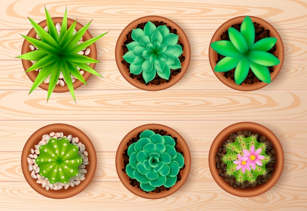 Top view plant on wooden table set