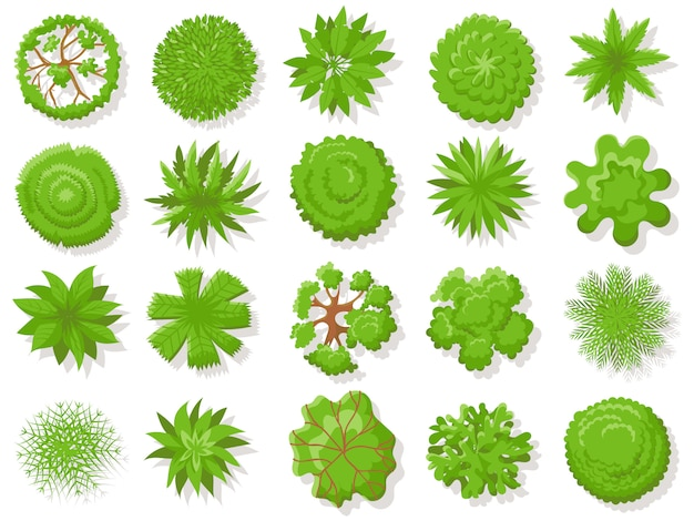 Top view plants. tropical trees, green plant tree from above for aerial map isolated  collection