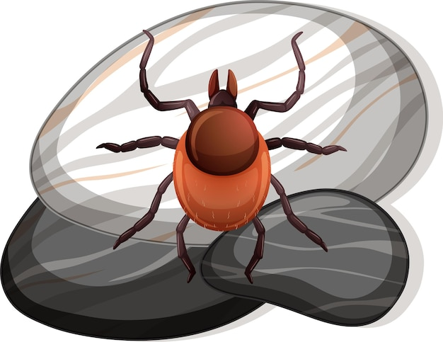Top view of tick on a stone on white