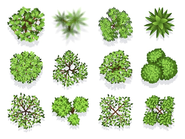 Top view tree collection - green foliage isolated