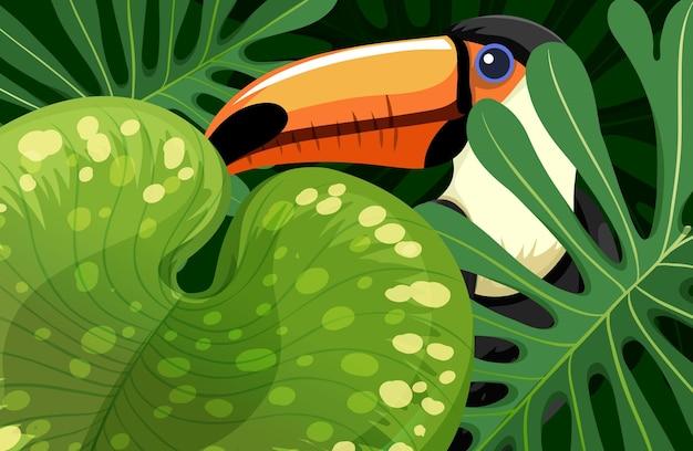 ジャングルに隠されたオオハシの鳥