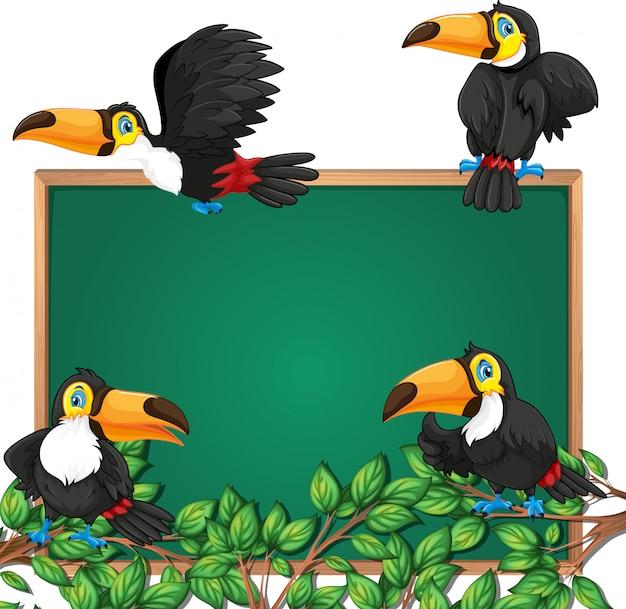 Toucan on blackboard frame