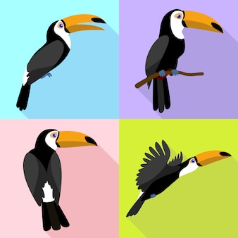 Toucan character set on flat cartoon style