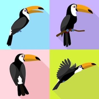 Toucan character set on flat cartoon style