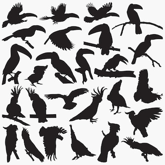 Toucan cockatoos silhouettes